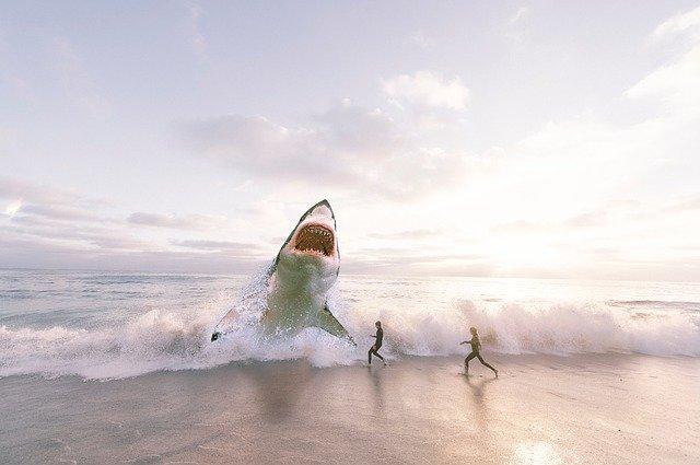 Есть ли акулы в Майами?